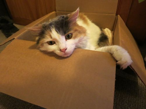 Felicity in a box, thedreamstress.com