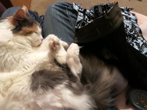Felicity on my lap
