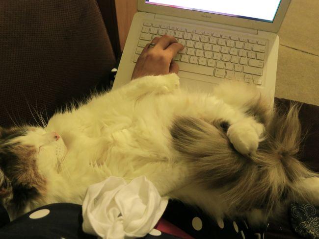 Felicity the cat the dreamstress.com
