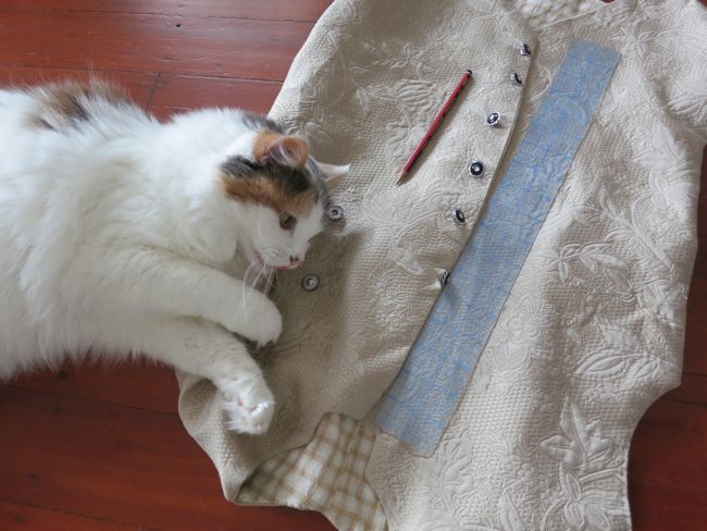 Felicity the cat and an 18th century waistcoat, thedreamstress.com