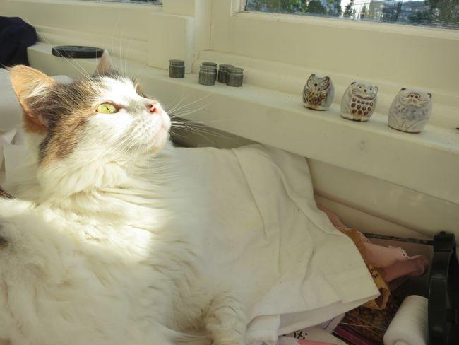 Tahi, Rua, & Toru, the sewing sprites (and Felicity the cat) thedreamstress.com