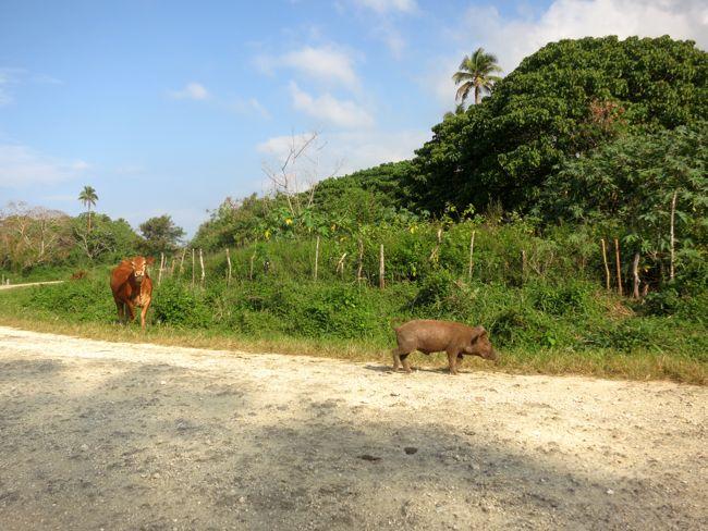 Bislama in Vanuatu thedreamstress.com