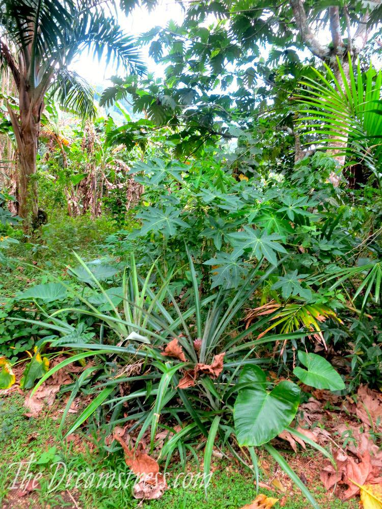 Mele Cascades, Vanuatu, thedreamstress.com08