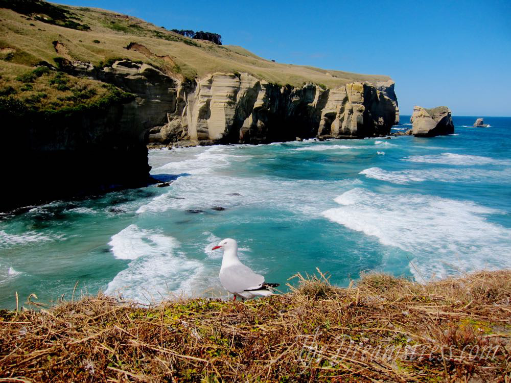 Tunnel beach, Dunedin thedreamstress.com
