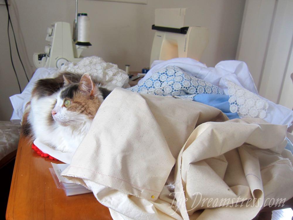 Felicity the cat thedreamstress.com