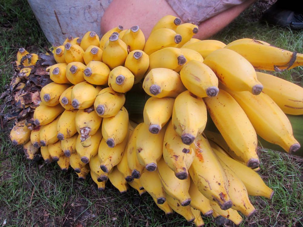 Bananas, Molokai, Hawaii, thedreamstress.com