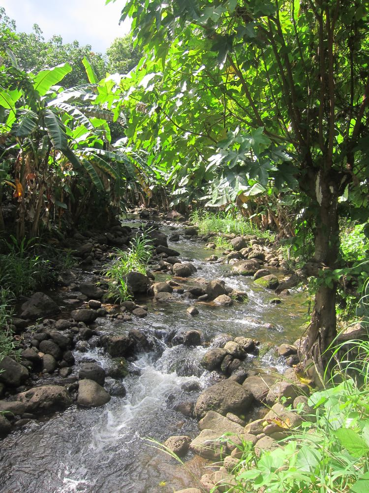Stream, Moloka'i, Hawaii thedreamstress.com