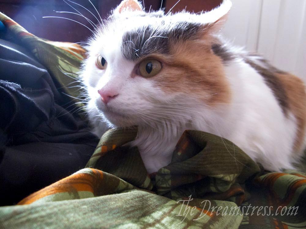 Grumpy Felicity, thedreamstress.com