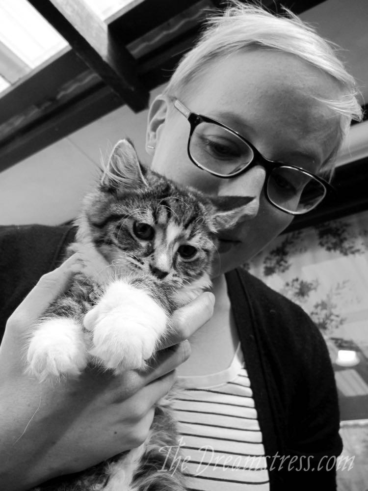 Kittens Inn kittens thedreamstress.com