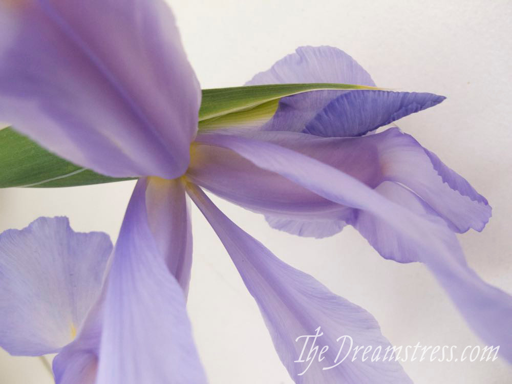 Spring Flowers 2017 thedreamstress.com