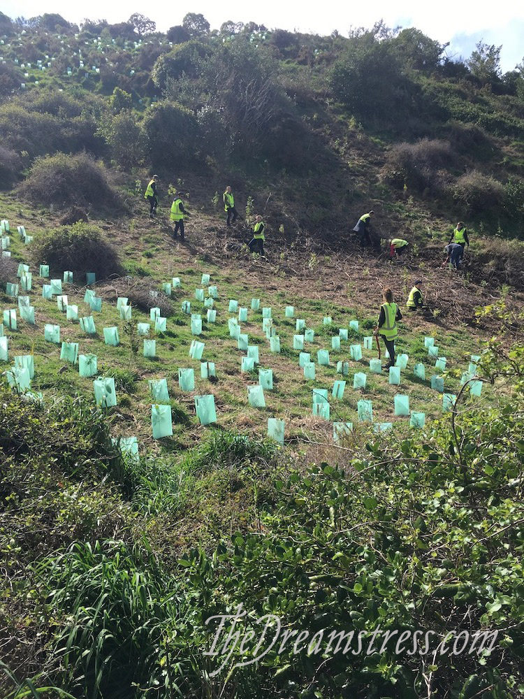 Tree planting at Island Bay, thedreamstress.com