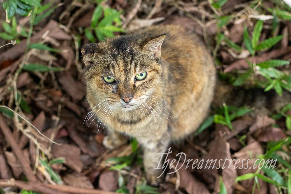 Cats, thedreamstress.com