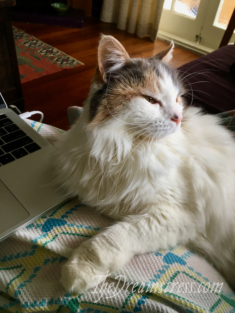 Felicity the Sewing Cat thedreamstress.com